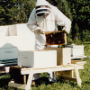 BeeMate Beekeeping Work Bench - Build One  or Buy One