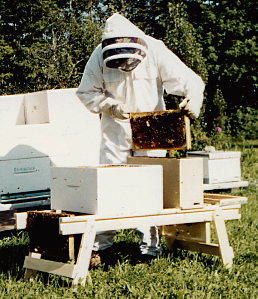 beemate-beekeeping-work-bench