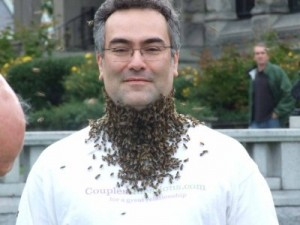 dans-beard-of-bees2